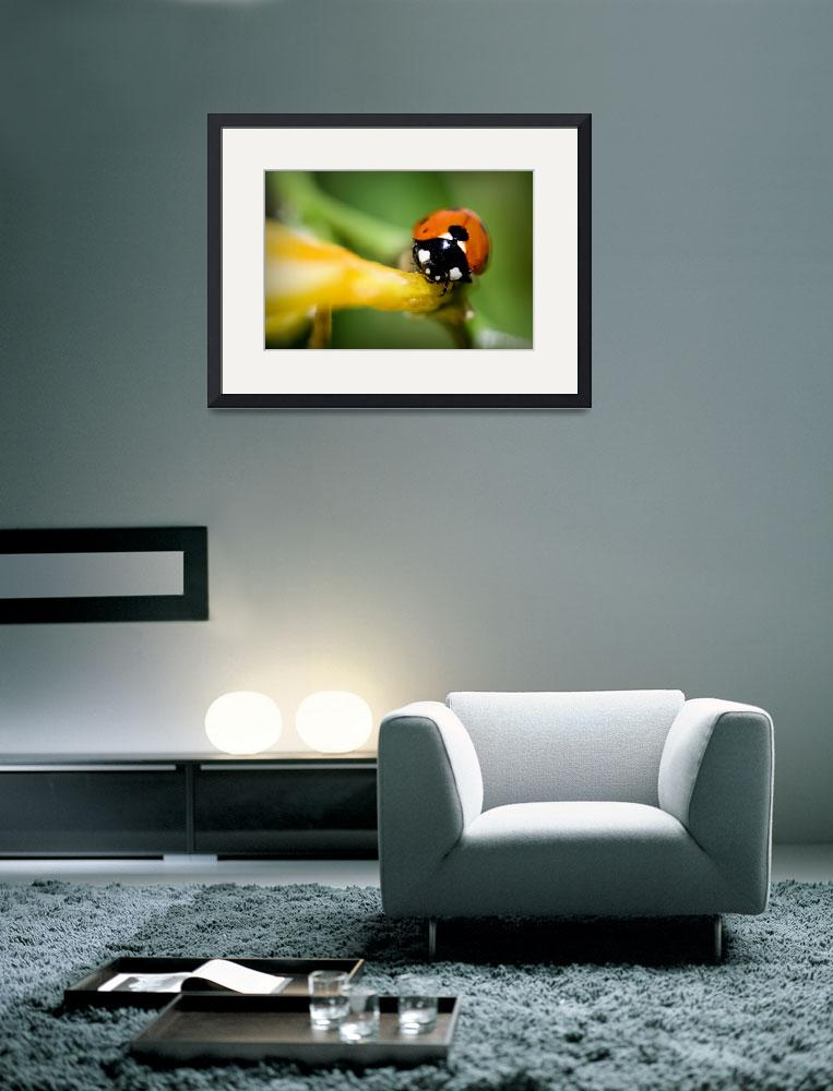 """""""Ladybug Close&quot  (2009) by NatureVision"""