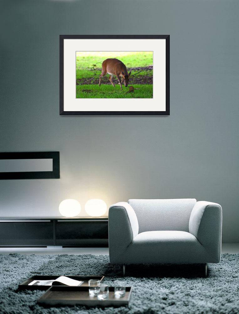 """""""Wild Muntjac&quot  (2008) by jdmphotography1"""
