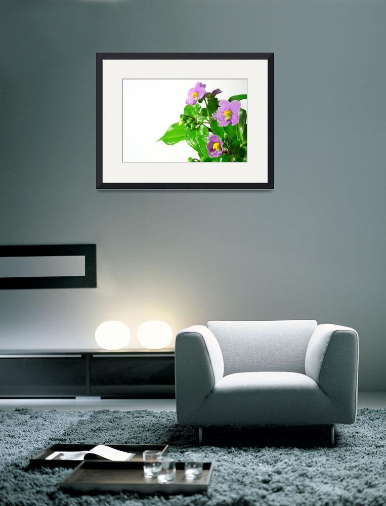 """""""Blooming persian violet&quot  (2008) by gavila"""