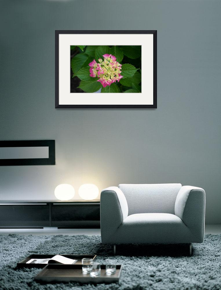 """Pink Flower&quot  (2010) by fitforframing"