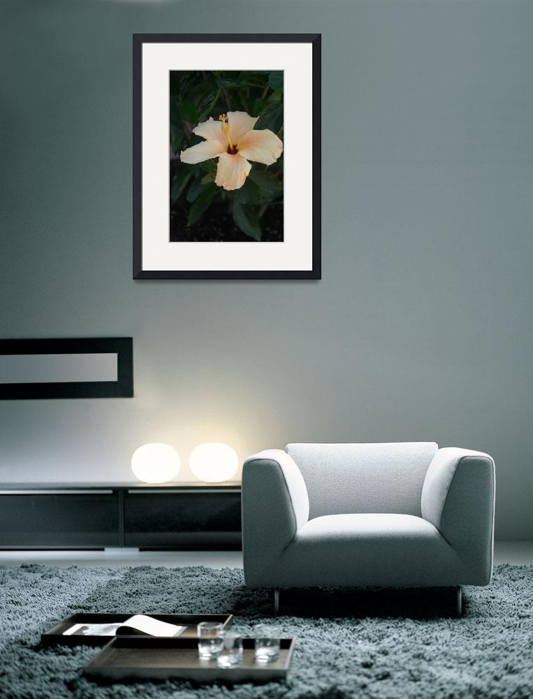 """Single Cream Colored Hibiscus Blossom&quot  (2009) by imaginativeimagery"