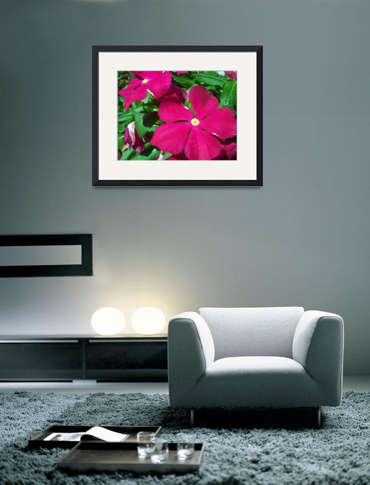 """""""Red Impatiens""""  (2011) by Shaun33551"""