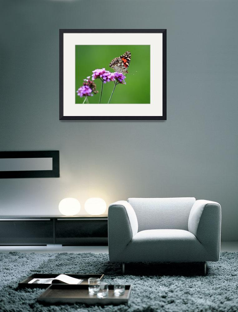 """American Painted Lady Butterfly""  (2012) by KsWorldArt"