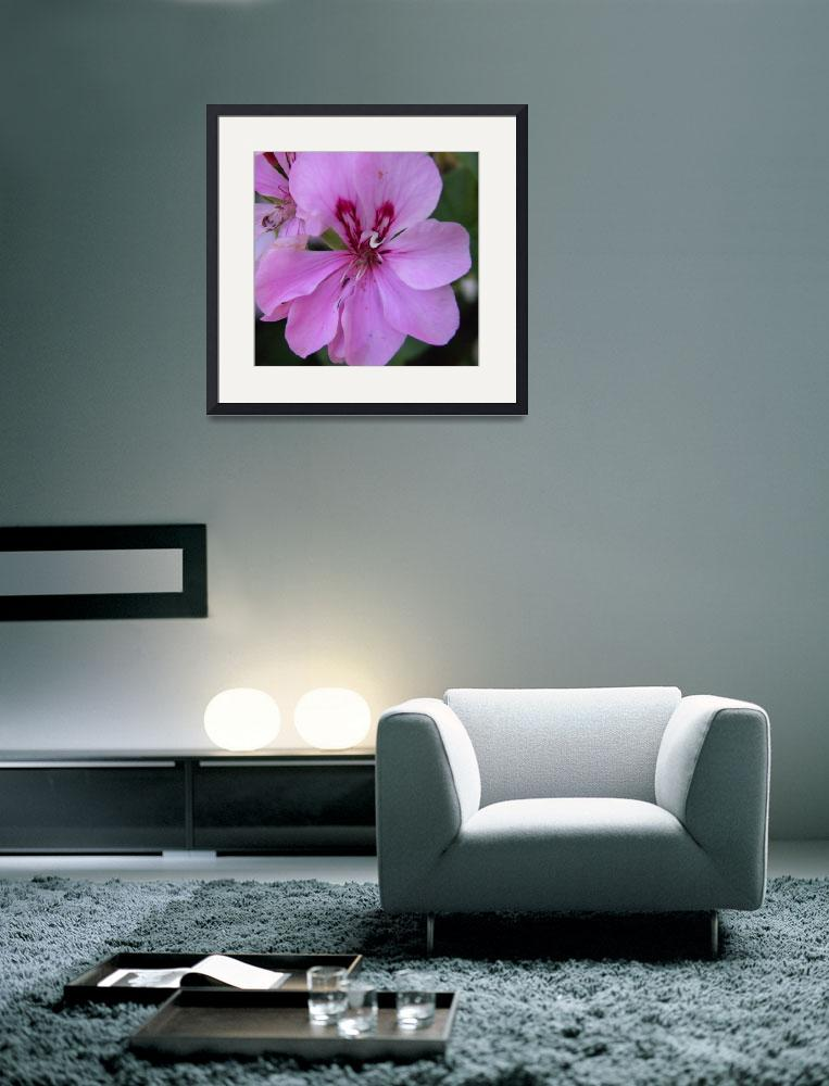 """""""pink flowers 6&quot  (2010) by sb1photography"""