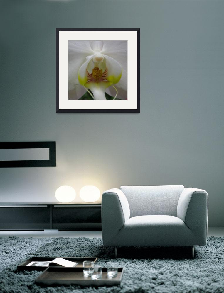 """""""The Whisper - Phalaenopsis Orchid&quot  (2004) by CRS"""