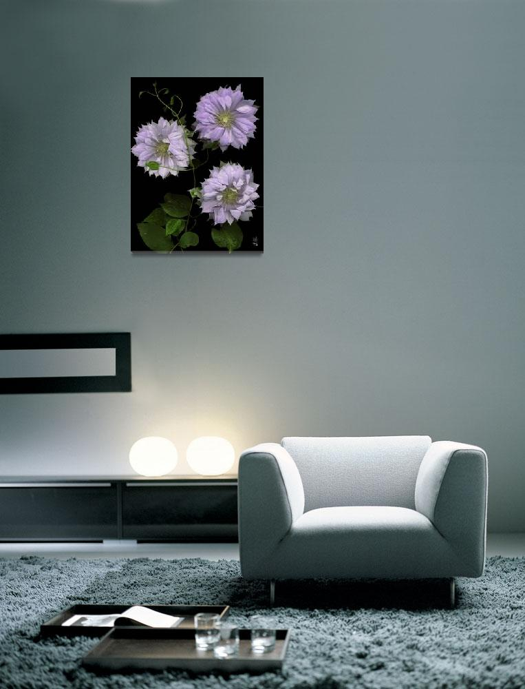 """""""Charming Multi - Petaled Clematis""""  (2005) by thirdeyeimage"""