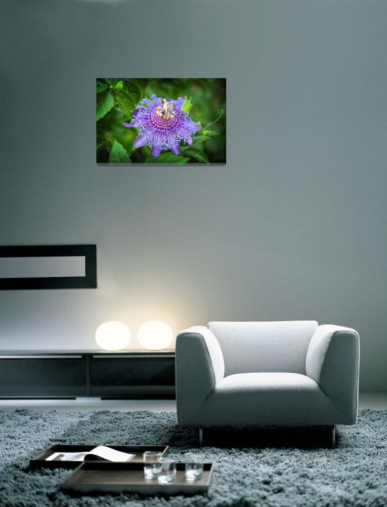 """""""Passion Flower&quot  (2014) by LynnBauer"""