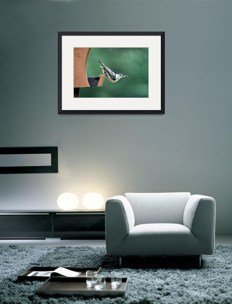 """""""Nuthatch Balancing&quot  (2013) by KsWorldArt"""