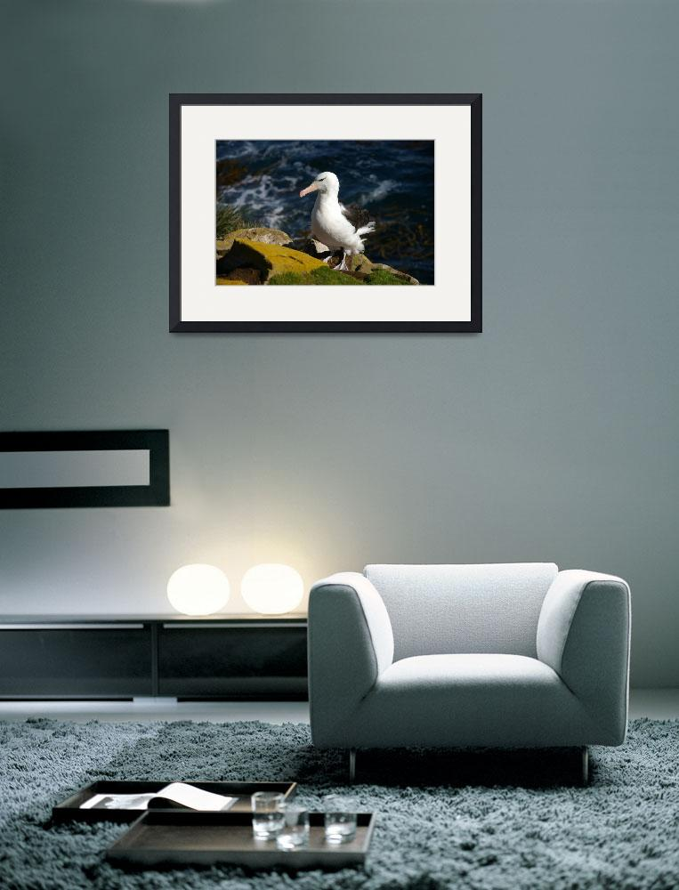 """""""Cross Looking Albatross Stand At Top Of Sea Cliff&quot  (2008) by MarilynsArt"""