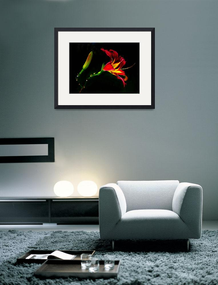 """""""Lily on Black&quot  by Juliesdigitalart"""