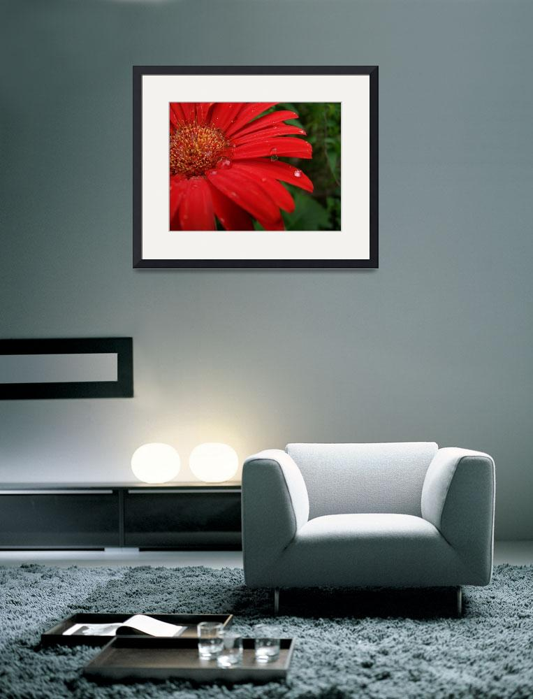 """""""Red Cornflower&quot  (2009) by sharriger"""