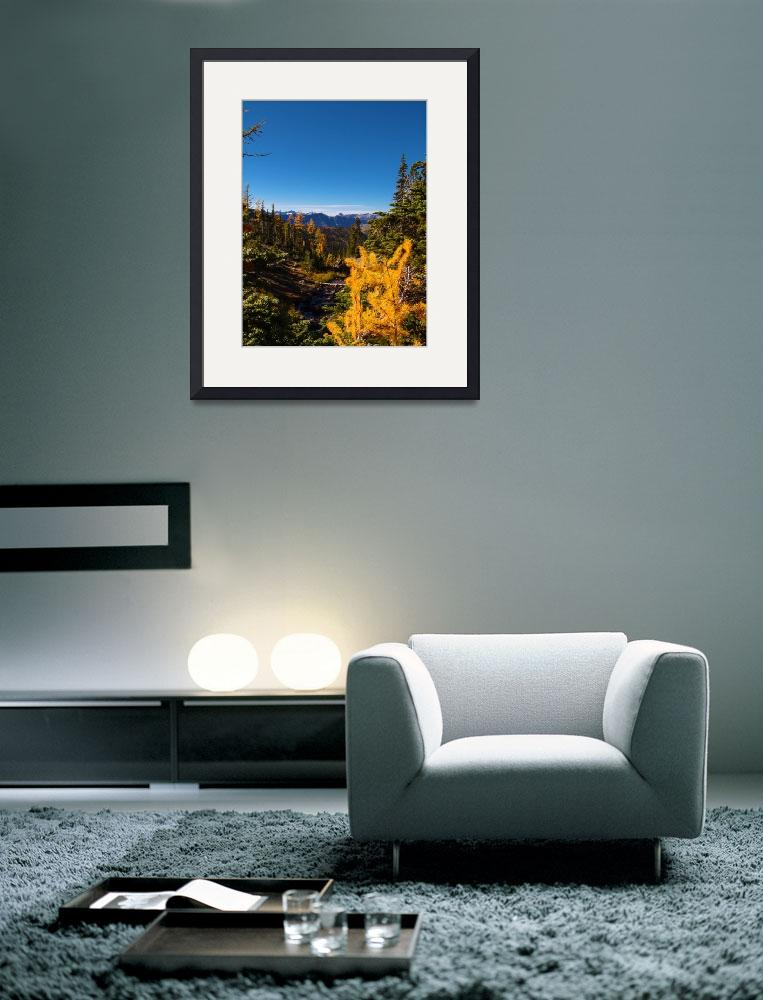 """""""Larch fall color near Lake Ann Alpine Lakes&quot  (2014) by dgolden"""
