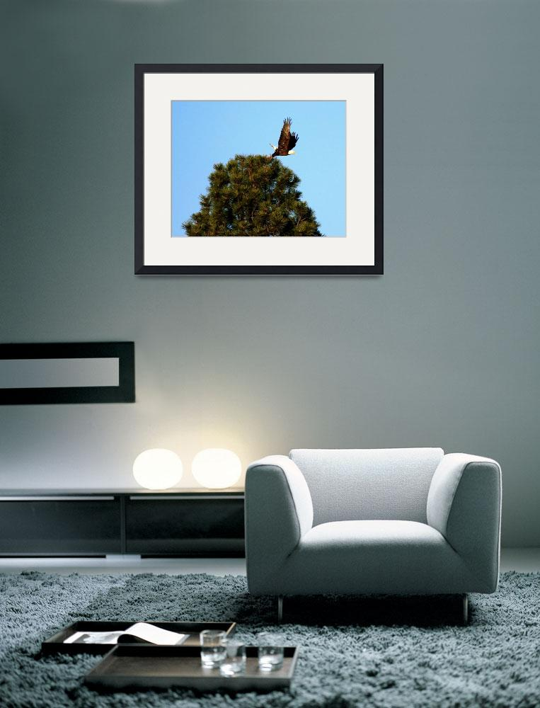 """""""EagleTake Off""""  (2009) by rayjacque"""
