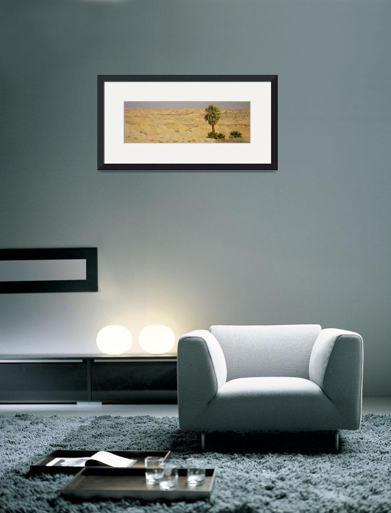 """""""Palm trees on an arid landscape&quot  by Panoramic_Images"""
