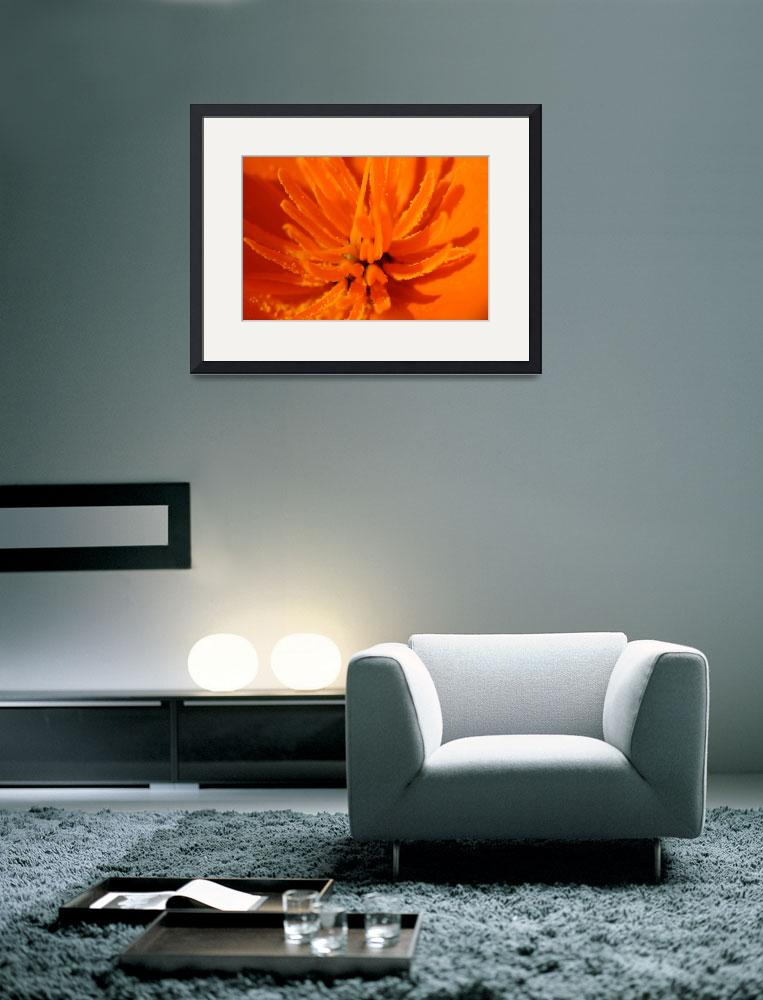 """""""California Poppy&quot  by JGphotography"""