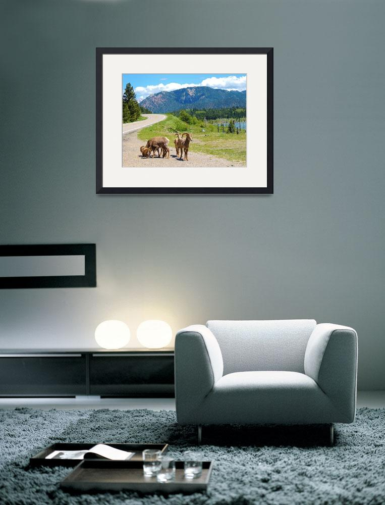 """Wildlife Of Big Sky Country - Bighorn Sheep&quot  by artsandi"