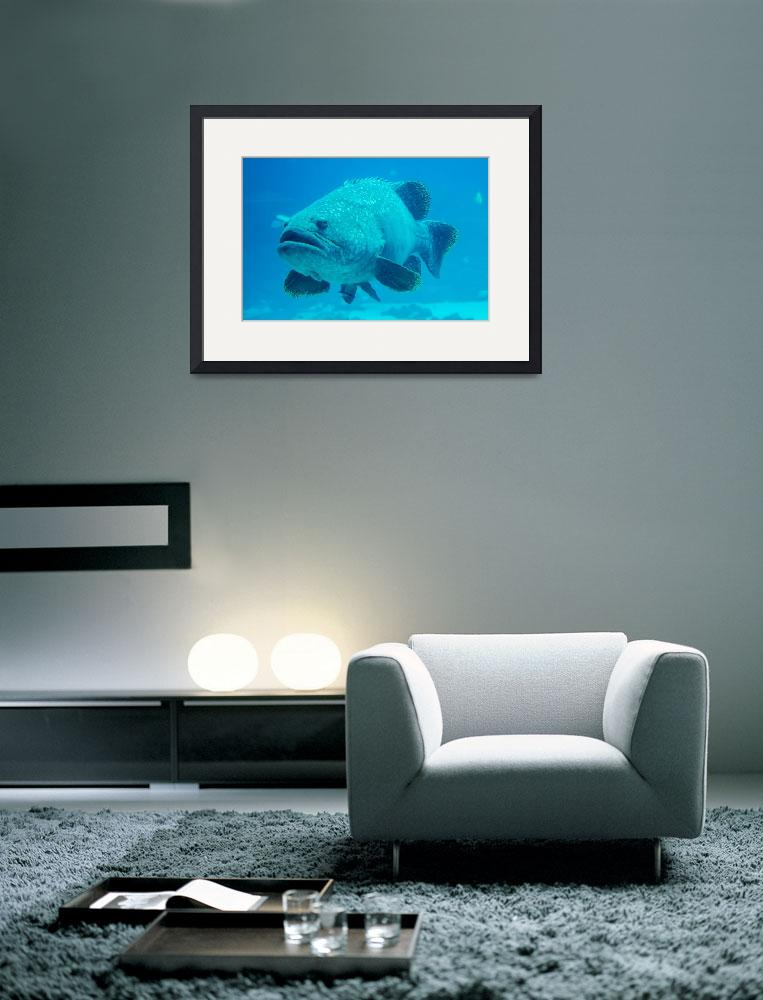 """""""giant grouper fish looking at diver&quot  by digidreamgrafix"""