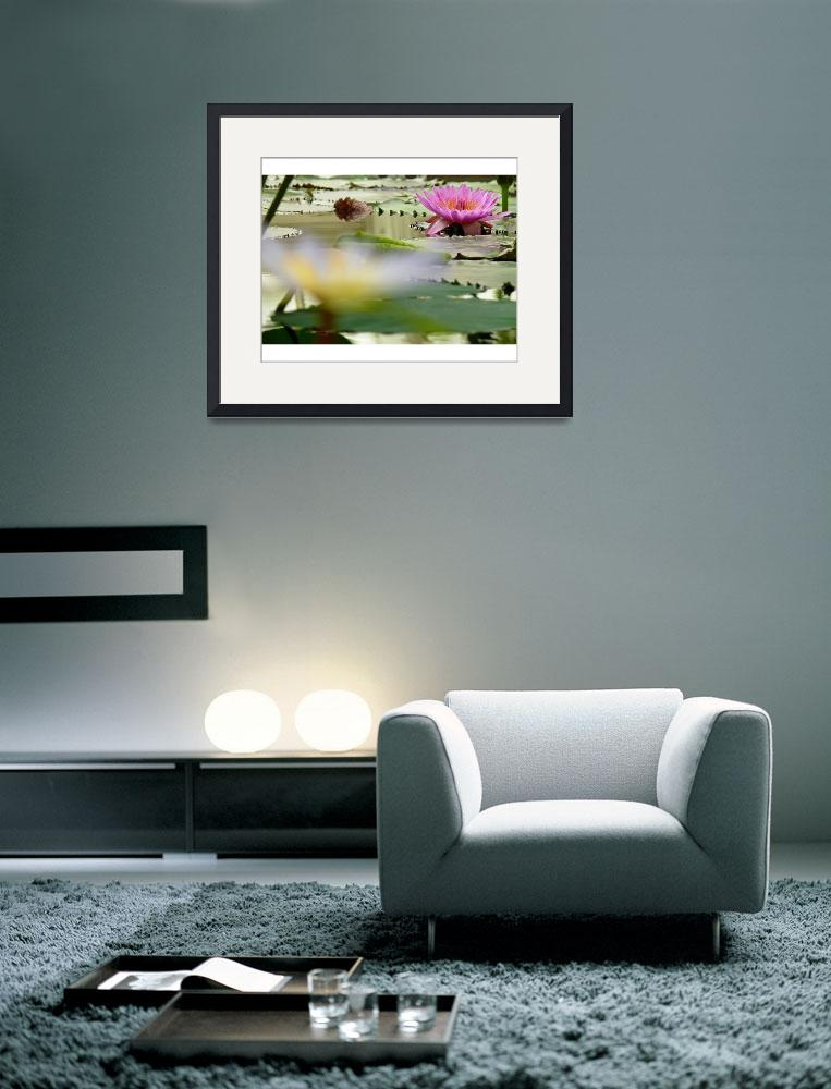 """Water Lily Far Focus""  (2007) by JonathanKarnofsky"