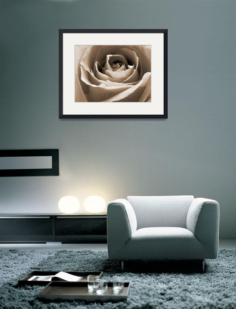 """Vintage Rose&quot  (2009) by Hartphotography"