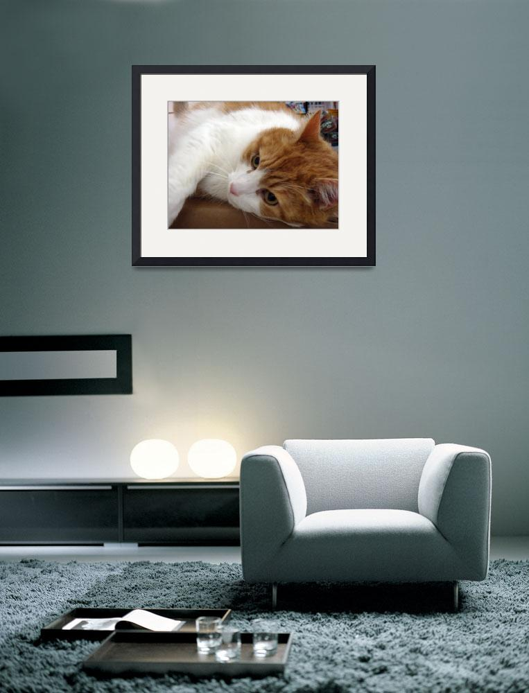 """""""Sweet Cat&quot  (2009) by ldfranklin"""