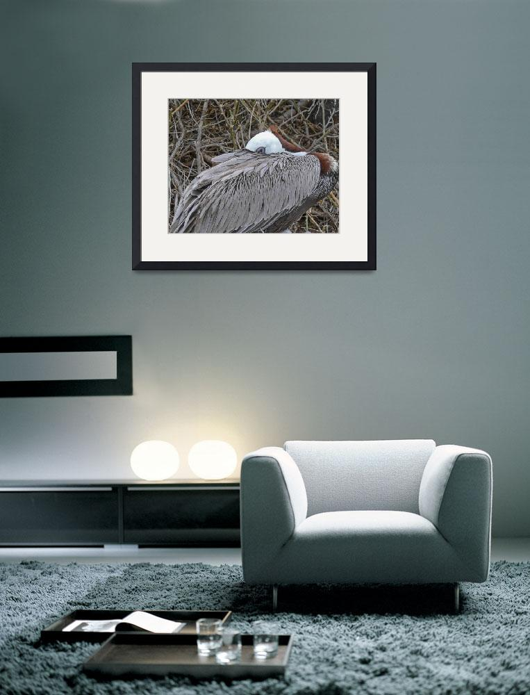 """""""Pelican keeps an eye on chicks&quot  (2007) by awsheffield"""
