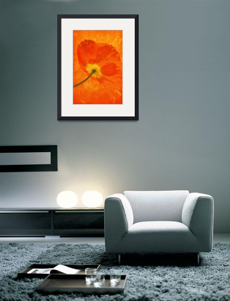 """Orange Poppy&quot  (2015) by SoulfulPhotos"