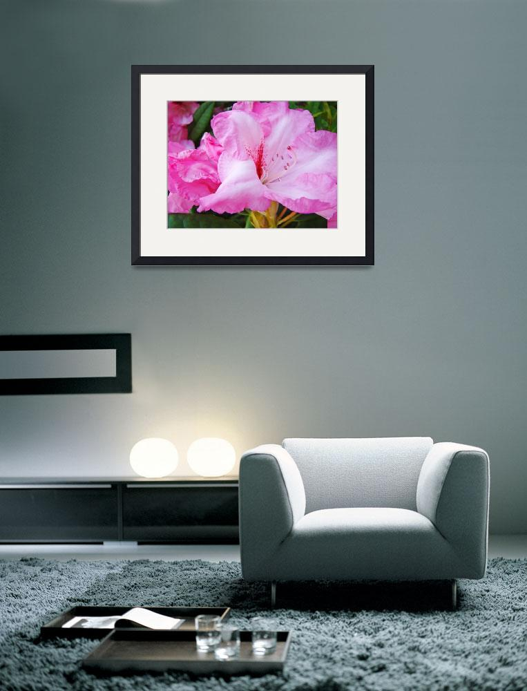 """""""Rhodies Floral art print gifts Pink Rhododendrons&quot  (2010) by BasleeTroutman"""
