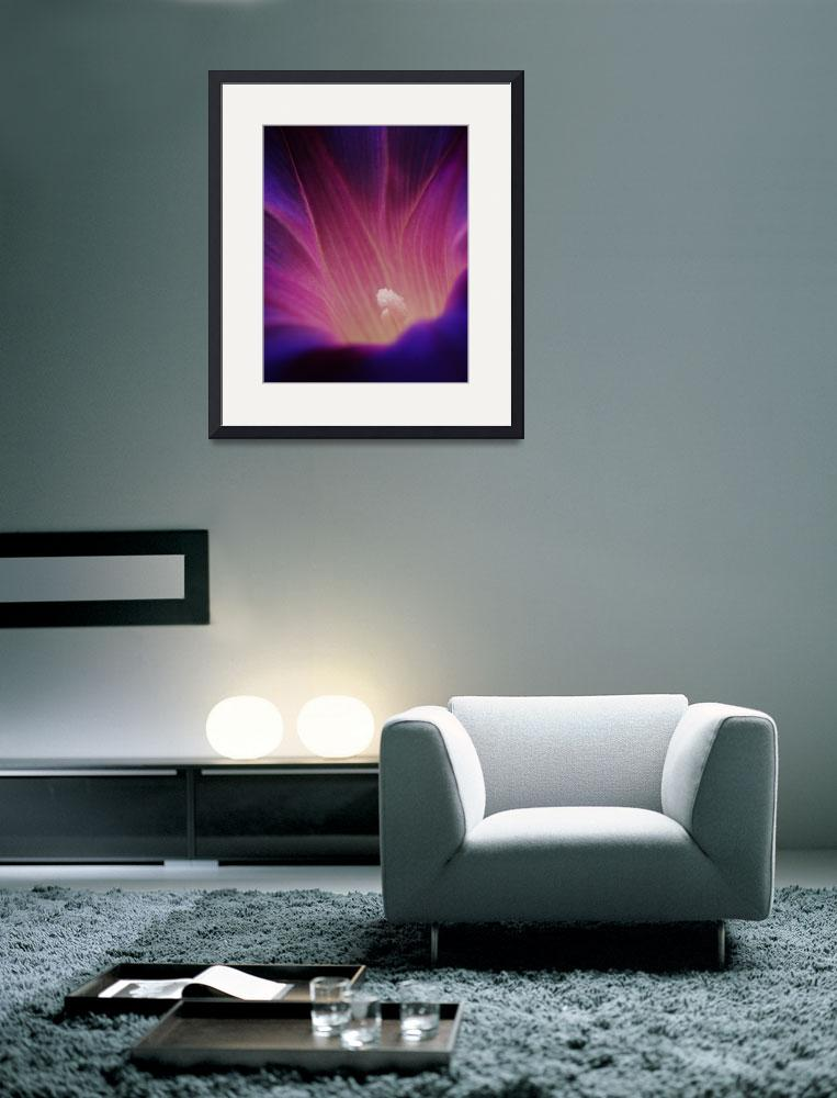 """""""Morning_Glory_Blossom&quot  (2008) by Rad"""