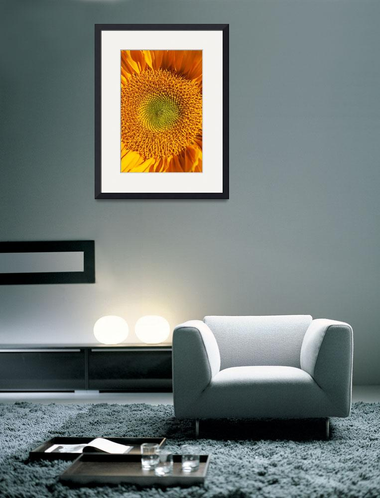 """""""Sunflower close up""""  (2012) by photogarry"""