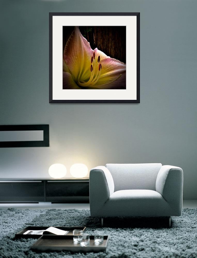"""""""Day Lily&quot  (2013) by bavosiphotoart"""