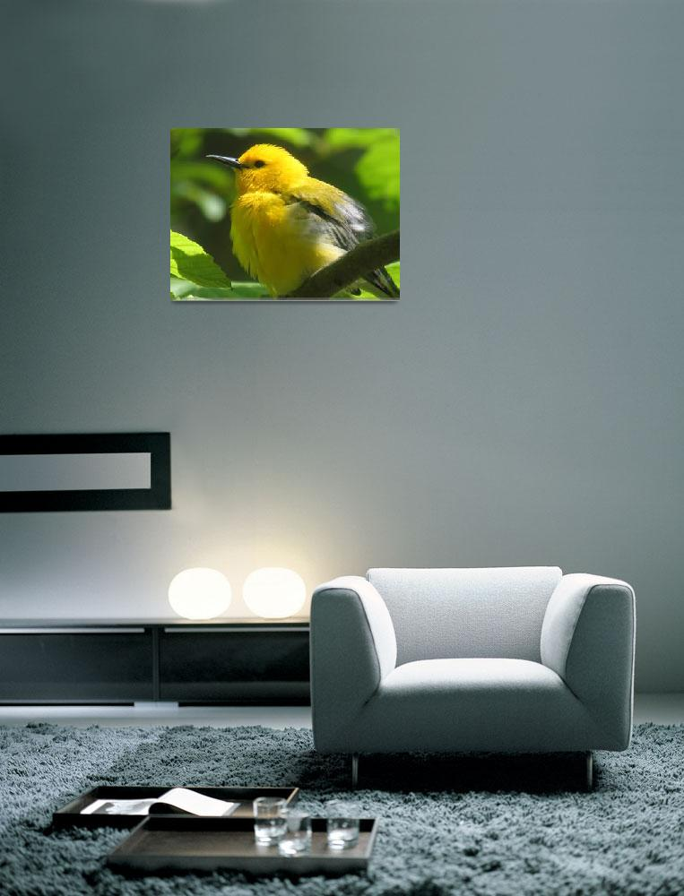 """""""Prothonotary Warbler in Ravine""""  (2007) by citybirder"""