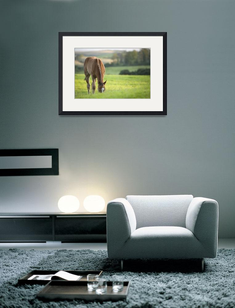 """Horse in field in county Wexford, Ireland""  by IanMiddletonphotography"