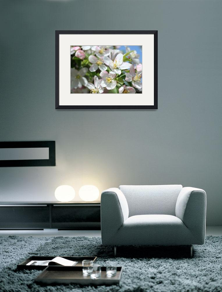 """""""White Fruit Blossoms Spring&quot  (2010) by ElliePhotoArt"""