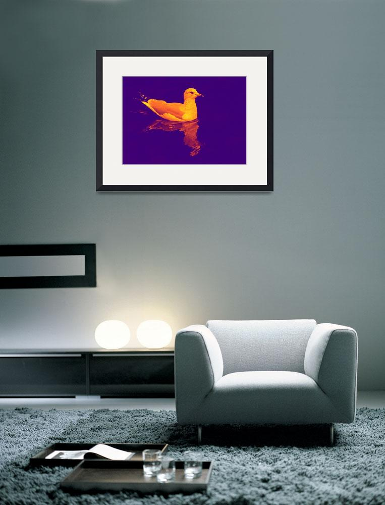 """""""Only A Seagull&quot  (2009) by shelshots"""