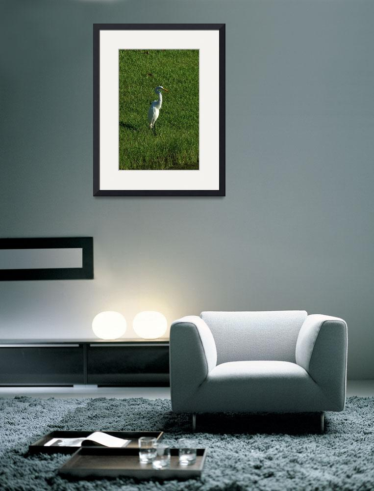 """""""Great Egret in Grass&quot  (2014) by rhamm"""