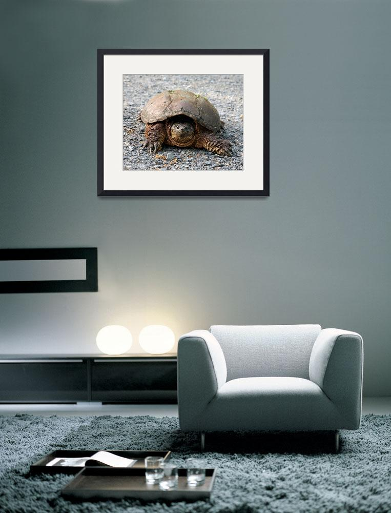 """""""Snapping Turtle&quot  (2013) by Peter-A-Kopher"""