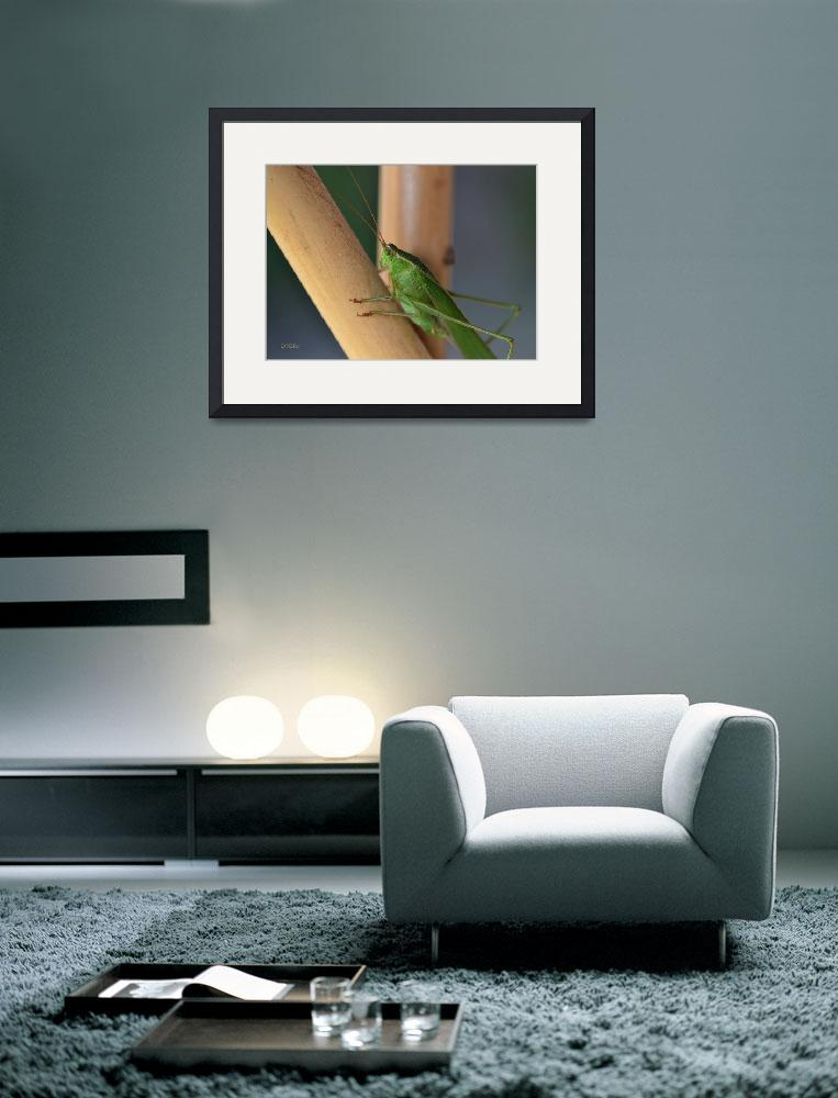 """""""Katydid Resting on Bamboo&quot  (2012) by theblueplanet"""