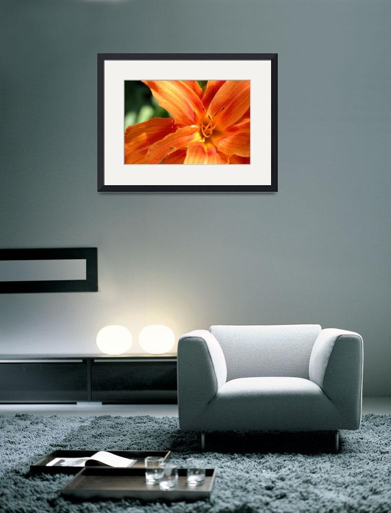 """""""orange lily&quot  by cwest24"""
