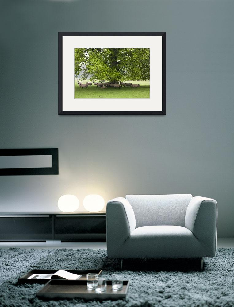 """""""Sheep Standing Under A Tree Northumberland, Engla&quot  by DesignPics"""