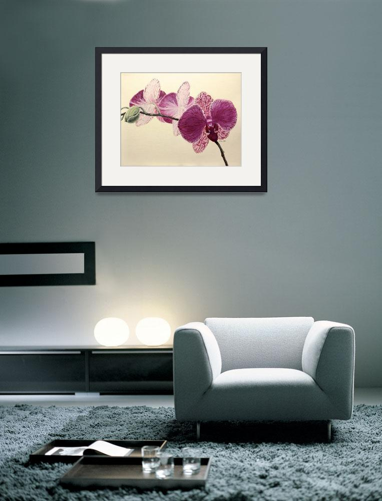 """""""Pink Orchid&quot  (2014) by marypalmer"""