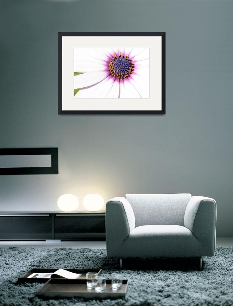 """White Daisy with Purple Center&quot  (2009) by KatRosePhotography"