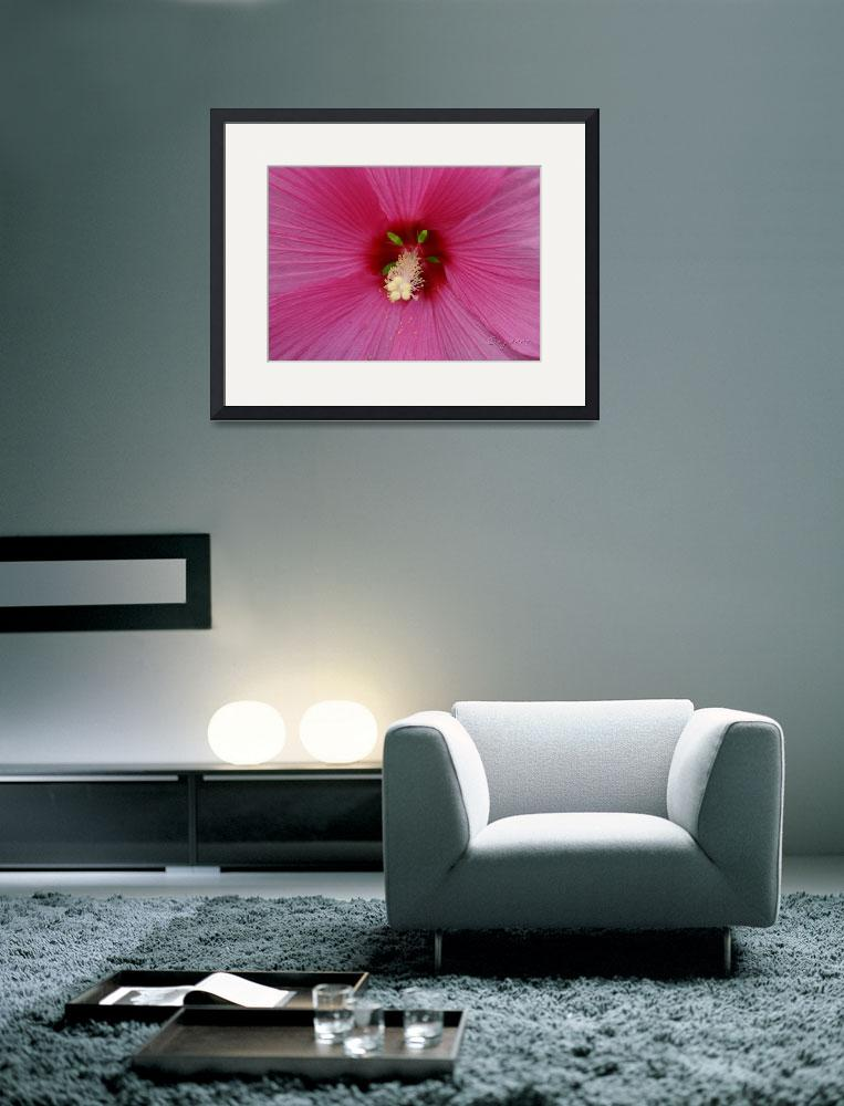 """""""""""Pink Hibiscus""""&quot  (2007) by vpardophotography"""