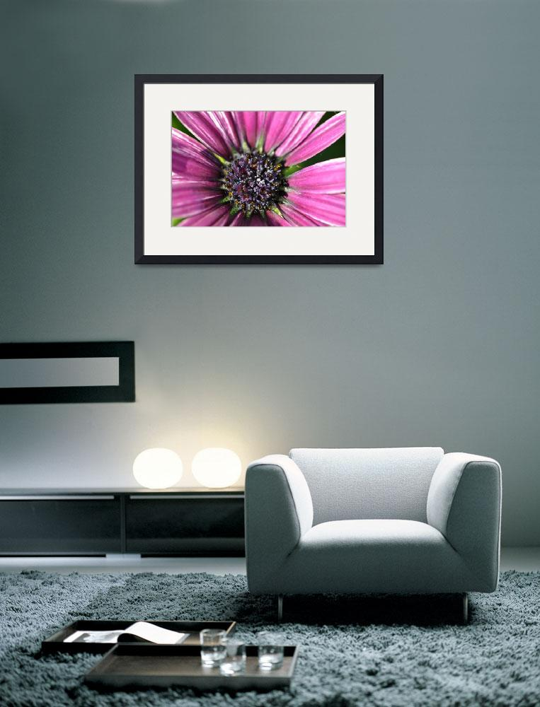 """""""Purple Passion Daisy&quot  (2010) by ElliePhotoArt"""