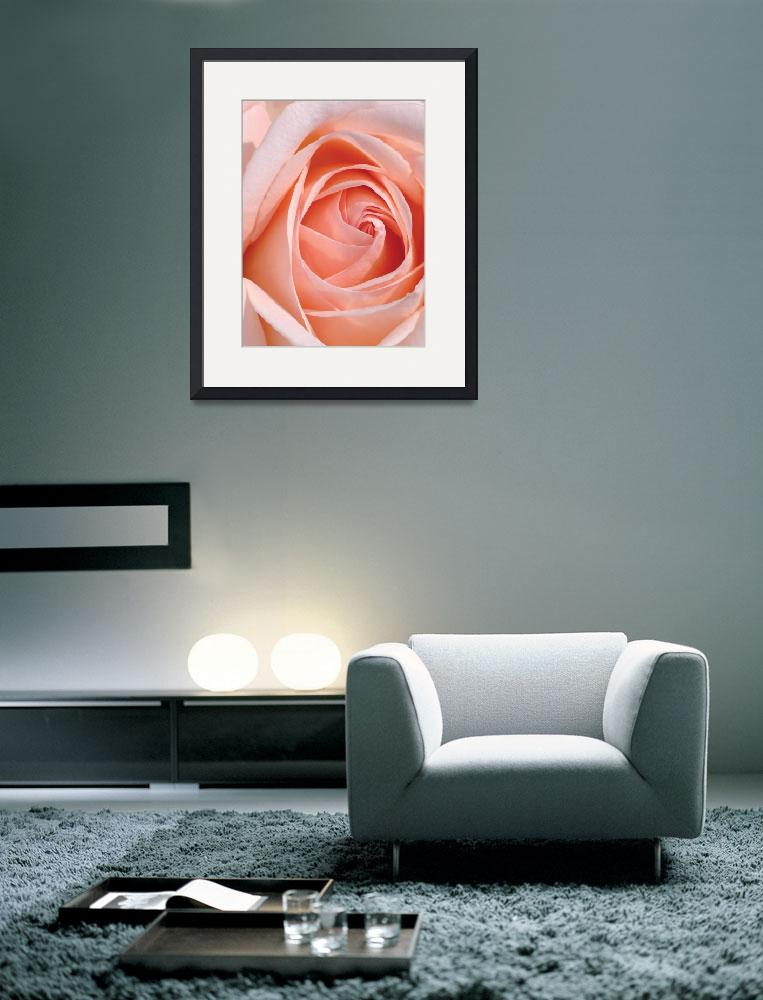 """Flower 001a Pink Spring Rose""  (2010) by Ricardos"