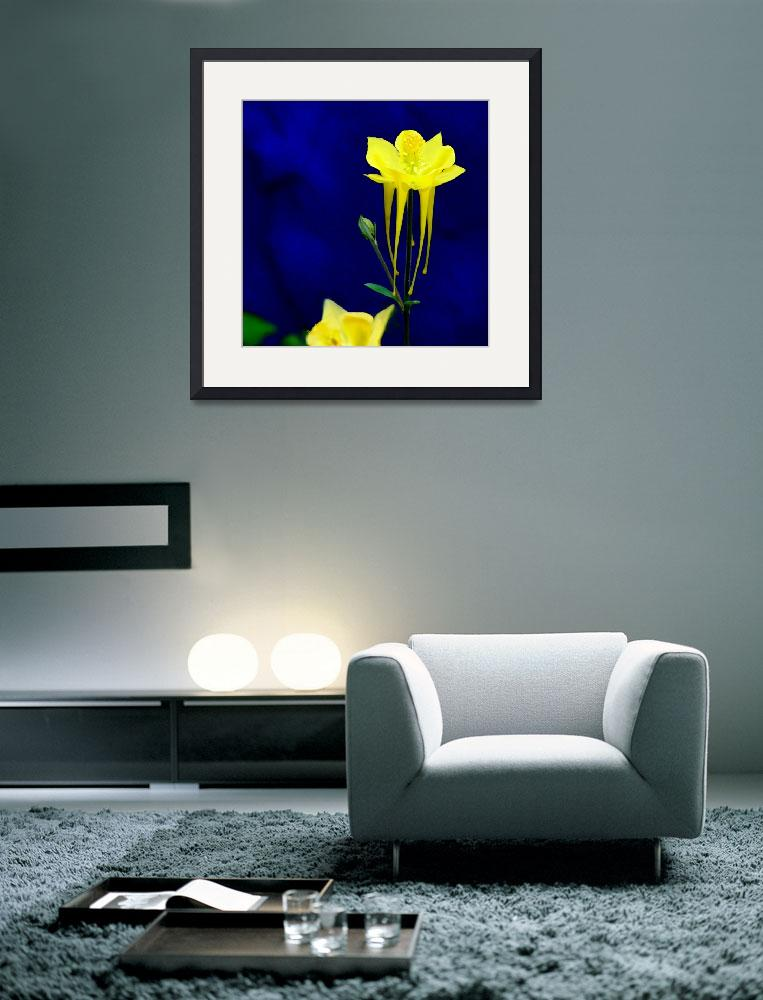 """""""Yellow Columbine w blue wall&quot  (2007) by Kirby"""