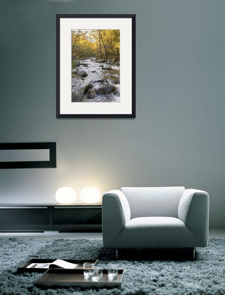 """""""Stream in Yellow Autumn Woods&quot  (2005) by stevenricciphotography"""
