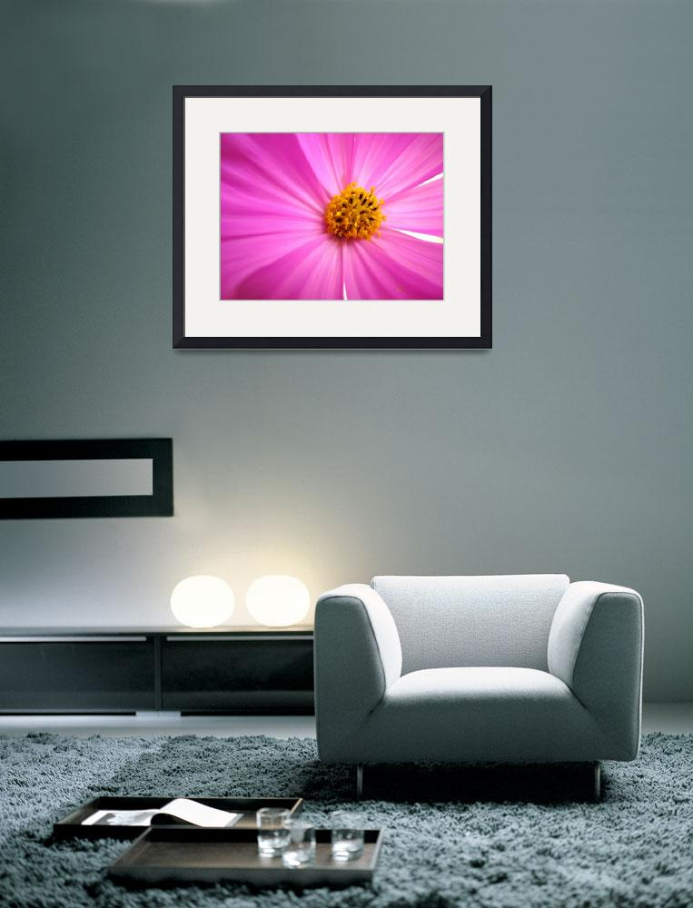 """""""Pink Cosmo&quot  (2008) by BuyArt"""