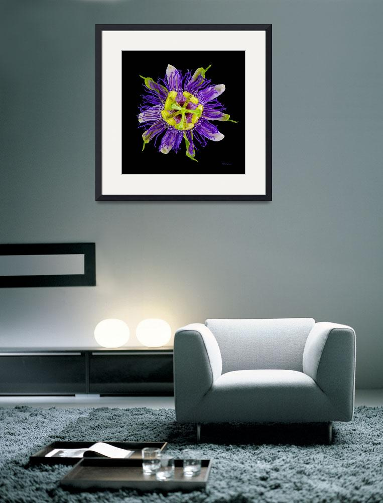 """""""Yellow Green and Violet Passion Flower 50674C&quot  (2018) by Ricardos"""