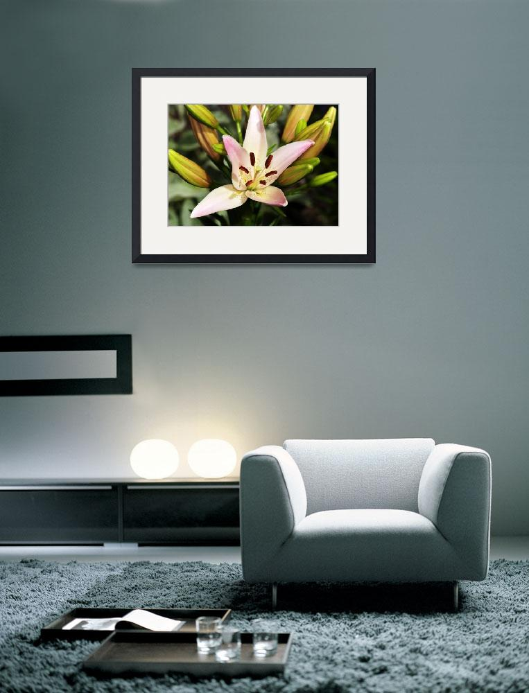 """""""Pink/White Lily&quot  (2010) by feagans_photography"""