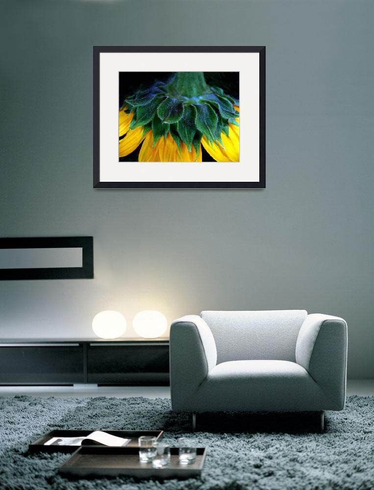 """""""Sunflower&quot  (2008) by JessicaJenney"""